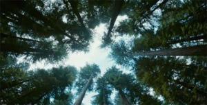 trailer-espanol-el-arbol-vida-brad-pitt-sean--L-x5ilUD
